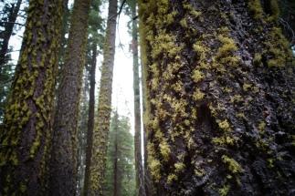 We heart Lichen.