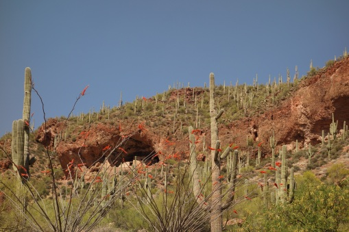 Tonto National Monument Cliff Dwellings- nearly 700 years old.