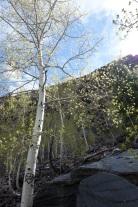 Bear Creek hike